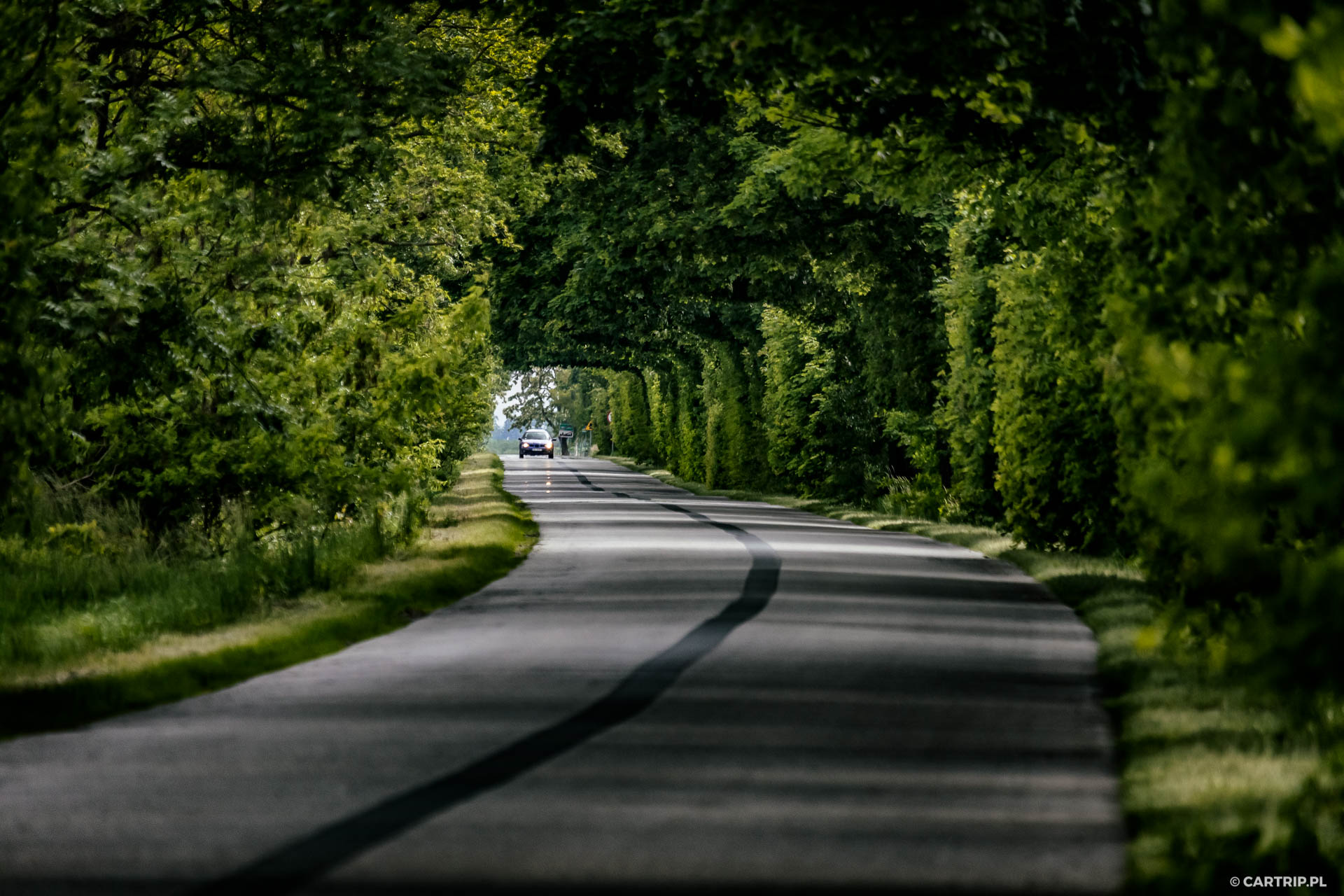 Green tunel on the road near Olesnica. Poland